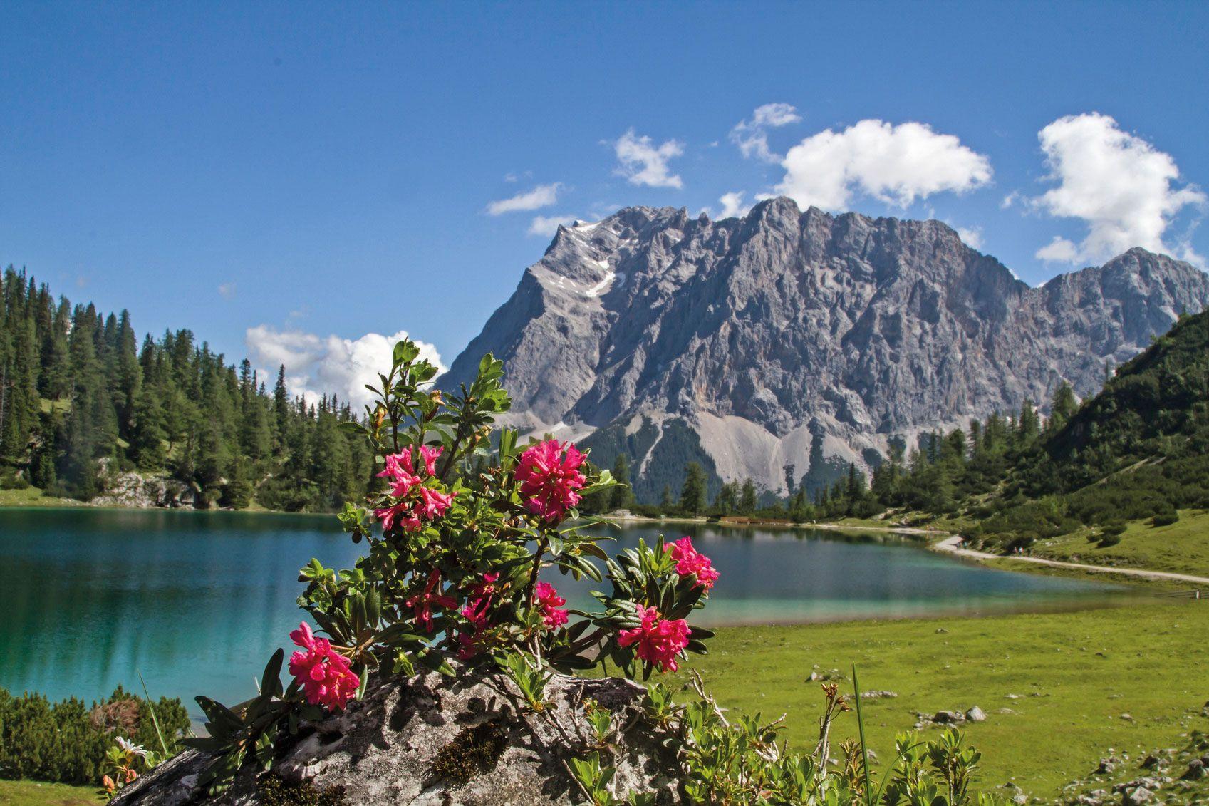 Alpenrose See Seeeben und Zugspitze Stockfoto